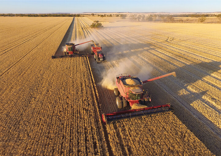 Combine harversters working a field