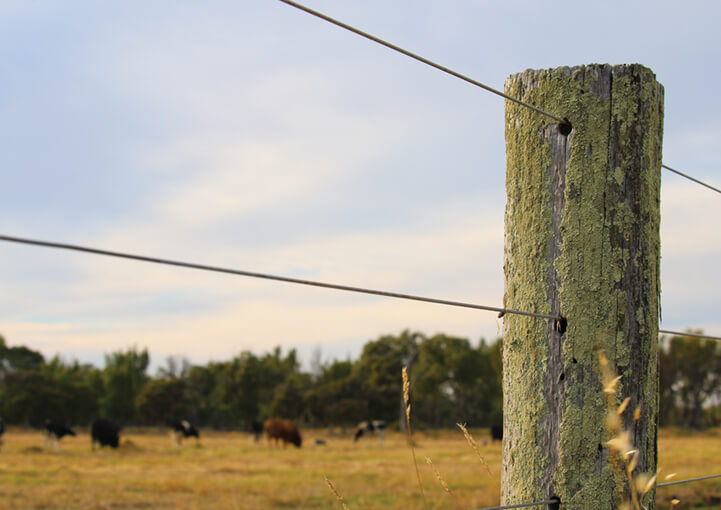 Close up of farm fence with grazing cows in background
